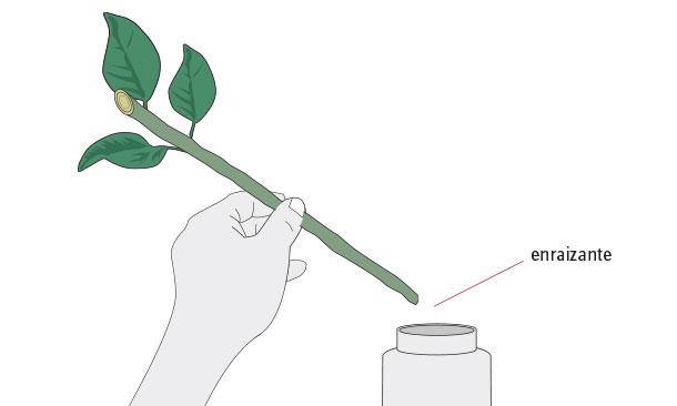 H galo usted mismo c mo reproducir plantas con esquejes for Planta ornamental que se reproduzca por esquejes