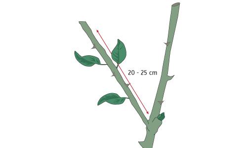 H galo usted mismo c mo hacer esquejes for Planta ornamental que se reproduzca por esquejes