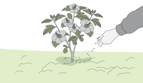 H galo usted mismo c mo fertilizar las plantas en - Como se aplica el microcemento paso a paso ...