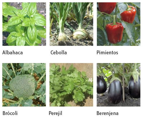 H galo usted mismo c mo hacer una huerta en primavera for Plantar pimientos y tomates