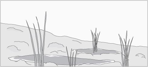 C mo mejorar el drenaje de su jard n ferjuca blog for Suelo organico para dibujar