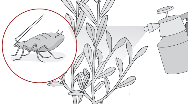 Hágalo Usted Mismo - ¿Cómo controlar las plagas del jardín en ...