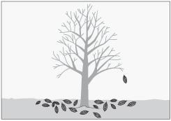 H galo usted mismo poda sus principios e importancia for Arboles frutales de hoja caduca
