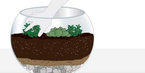 H galo usted mismo c mo hacer un terrario - Como construir un terrario ...