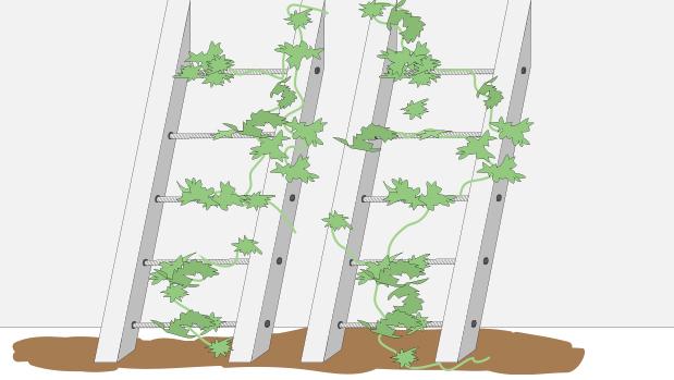 H galo usted mismo c mo hacer tutores para cubrir muros - Plantas trepadoras para muros ...