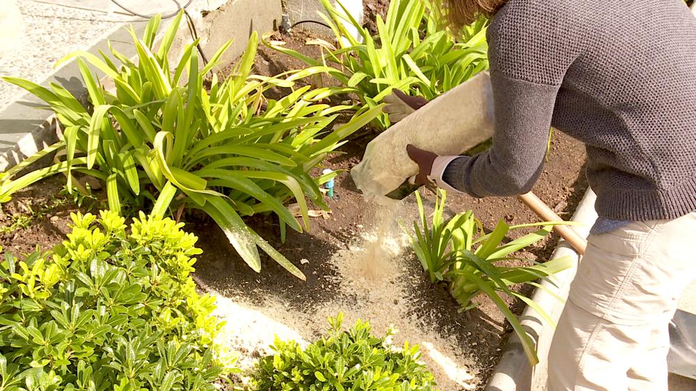 Las virutas de maderas al natural o el aserrín son un excelente nutriente que podemos usar en nuestro jardín. Al igual que la turba, funciona como un mejorador y aireador del suelo, otorgándole oxígeno para un óptimo desarrollo de nuestras especies.