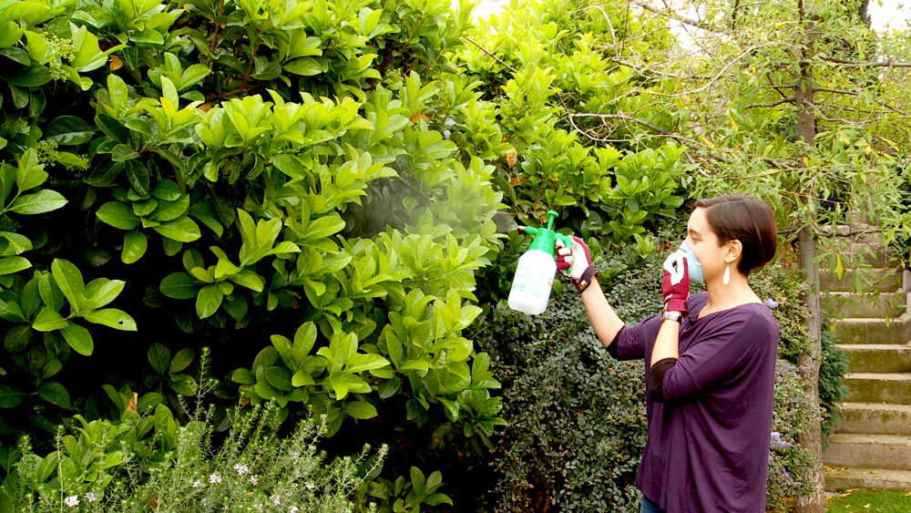 H galo usted mismo c mo controlar las plagas del jard n for Insectos del jardin