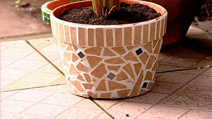 hágalo usted mismo - ¿cómo recuperar plantas con exceso de riego?