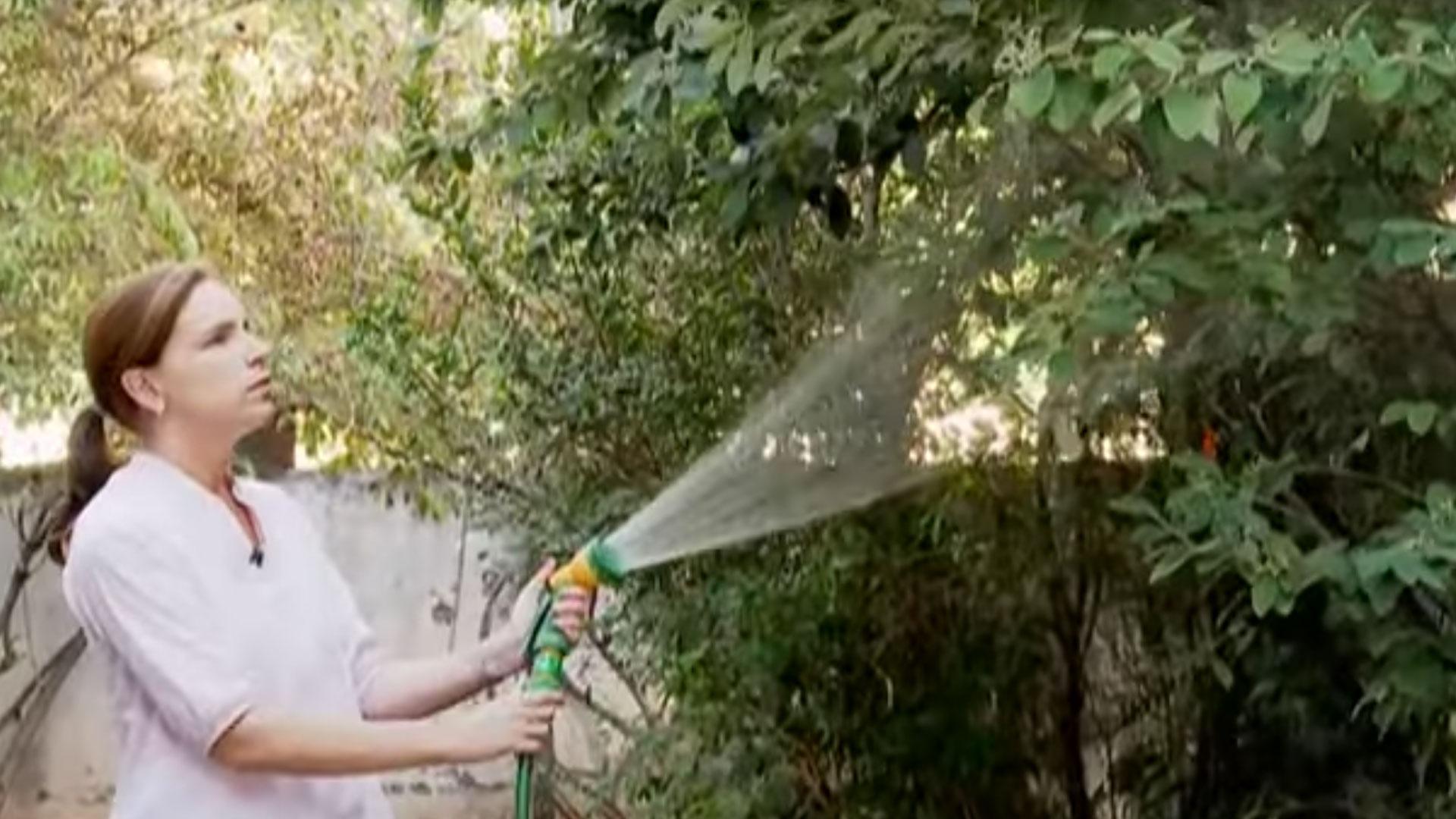 En marzo, ya finalizando el verano en el hemisferio sur, debemos trabajar más en el jardín para recuperarlo del calor de la época estival, la falta de agua y porque todo ha crecido desmesuradamente. Con estas simples labores lo dejarás como nuevo y listo para el otoño.