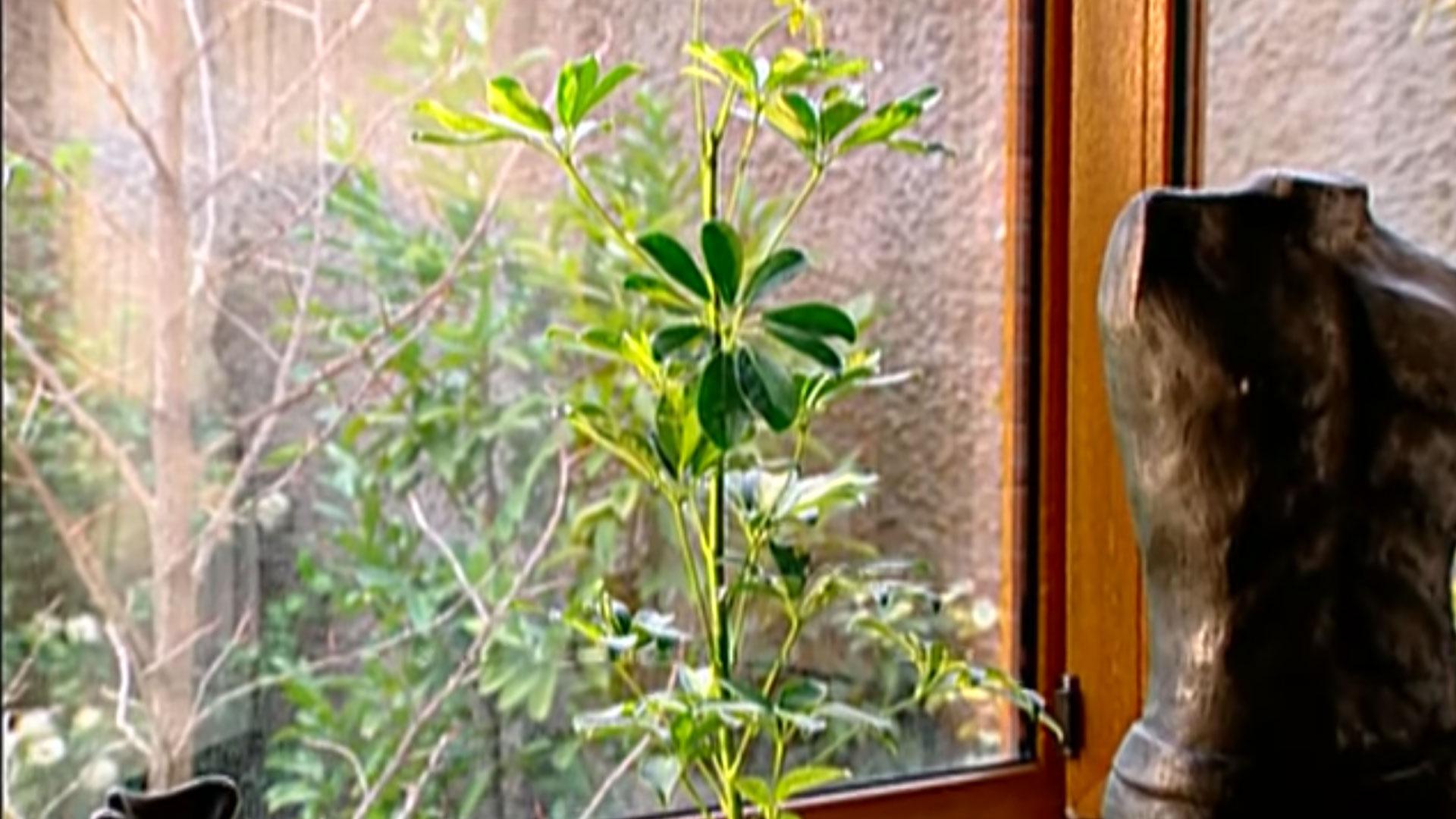 Las plantas que están en el interior de la casa necesitan ciertos cuidados diferentes a las plantas que normalmente mantenemos en el exterior, ya que la mayoría son originarias de climas subtropicales que se caracterizan por temperaturas constantes y bastante humedad. En invierno las afecta mucho la calefacción y el encierro; mientras que en el verano sufren de deshidratación y calor.