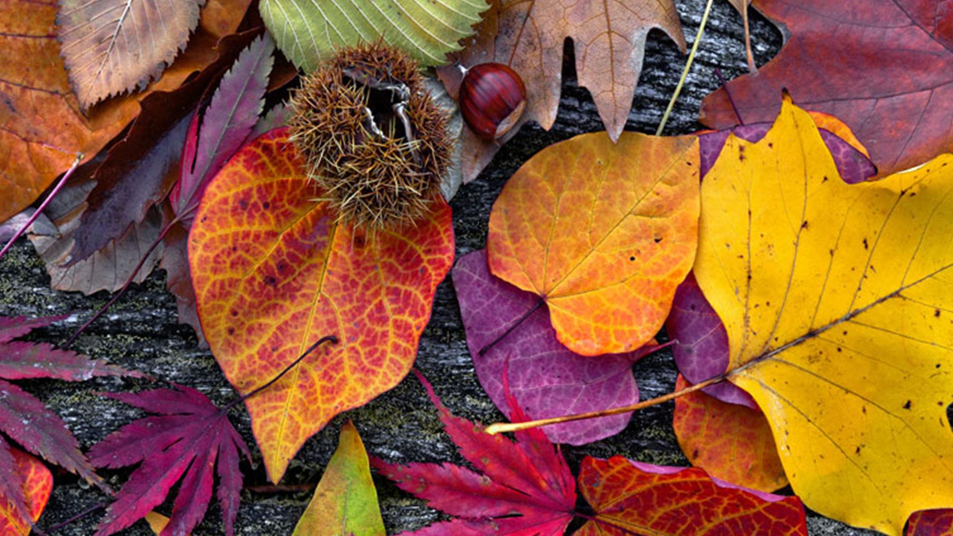 En abril comienza a manifestarse en plenitud el otoño, trayendo una sinfonía de colores y contrastes a los follajes. Es una época muy especial y hermosa, de un esplendor comparable incluso al de la primavera.La naturaleza realiza una especie de despedida llena de intensidad y cierta magia. Los días y noches cada vez más frescos, anuncian la pronta llegada del invierno y –aunque no faltan las fl ores de estación– las grandes protagonistas del jardín de abril son las hojas, que lo invaden por millones, partiendo de un verde casi regular que se transforma y degrada en tonalidades desde el amarillo al rojo intenso.