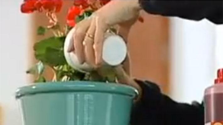 La fertilización a principios de primavera favorece el crecimiento de las plantas y repone la pérdida de minerales, como el nitrógeno, encargado del crecimiento del follaje, el fósforo, que fortalece las raíces, y el potasio, que mejora la calidad y cantidad de flores o frutos. Durante el invierno, la lluvia, hace perder nutrientes del suelo, por lo que es importante recuperarlos aplicando abonos y fertilizantes.