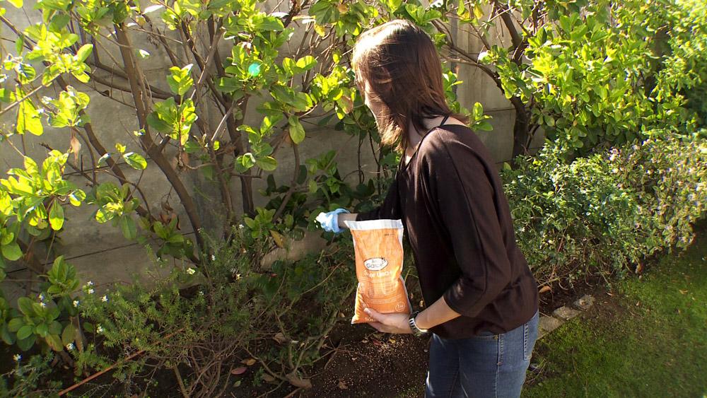 H galo usted mismo c mo plantar bulbos for Abono para las plantas de jardin