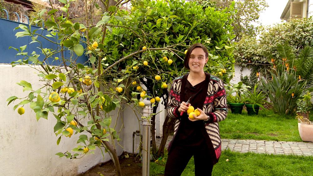 Un plan de mantenimiento a largo plazo para los frutales es fundamental para asegurar la cantidad y calidad de sus frutos. En este caso los cítricos tienen altos requerimientos de nitrógeno y potasio, y la época de primavera - verano es ideal para aportar este tipo de fertilizantes minerales.