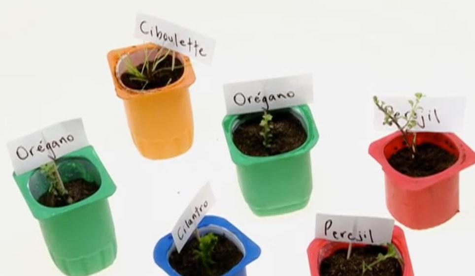 Si queremos cultivar vegetales y/o hierbas aromáticas desde cero, necesitamos una almaciguera, un espacio pequeño para hacer germinar las semillas. Esto no se puede hacer en el lugar definitivo porque no todas las semillas germinan y no todos los brotes son los mejores. Para esta labor es bueno reutilizar los envases de yogurt, solo debes lavarlos y seguir el paso a paso a continuación para conseguir tus almácigos.