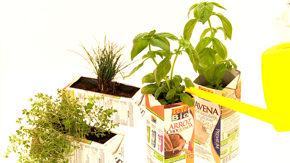 Tener un huerto de hortalizas o hierbas, ya sea en invernadero o al aire libre es una labor de jardinería que todos podemos realizar, incluso en un pequeño espacio de tierra o en maceteros. Se debe comenzar por hacer los almácigos, esto quiere decir sembrar las semillas para que salgan los brotes que después trasplantaremos a la huerta.