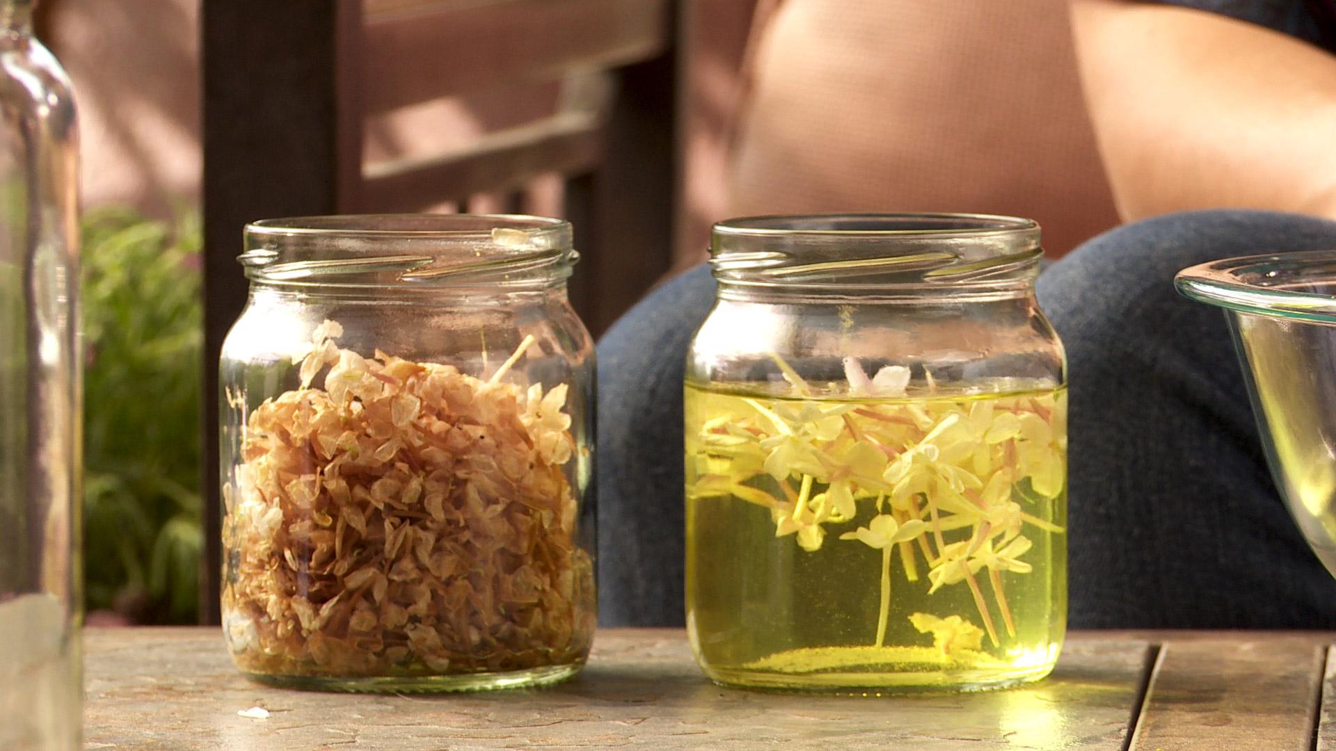 Primavera y verano es el período de floración del jazmín polyanthum o jazmín de china, una especie muy difundida por su abundante floración, y en especial por su fragancia, con la que se pueden hacer aromaterapia o aromatizadores de espacios.