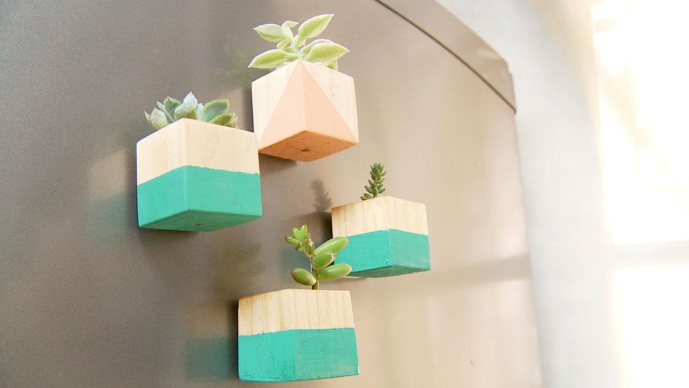 Una forma fácil y entretenida de multiplicar las suculentas y a la vez decorar el refrigerador o un espacio con poca luz son estos imanes elaborados con materiales reciclados como madera y corchos. Aparte de ser sencillos de construir aportan al lugar color y naturaleza.