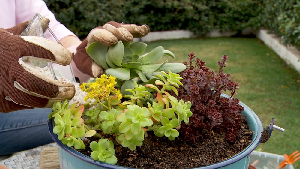 """Es habitual que en primavera se vean los primeros brotes en las suculentas, los conocidos """"hijitos"""", que son la forma de reproducción de este tipo de plantas. Ayudaremos a este proceso haciendo almácigos de los brotes, usando para ello cucharones reciclados que además podrán adornar una terraza o patio."""