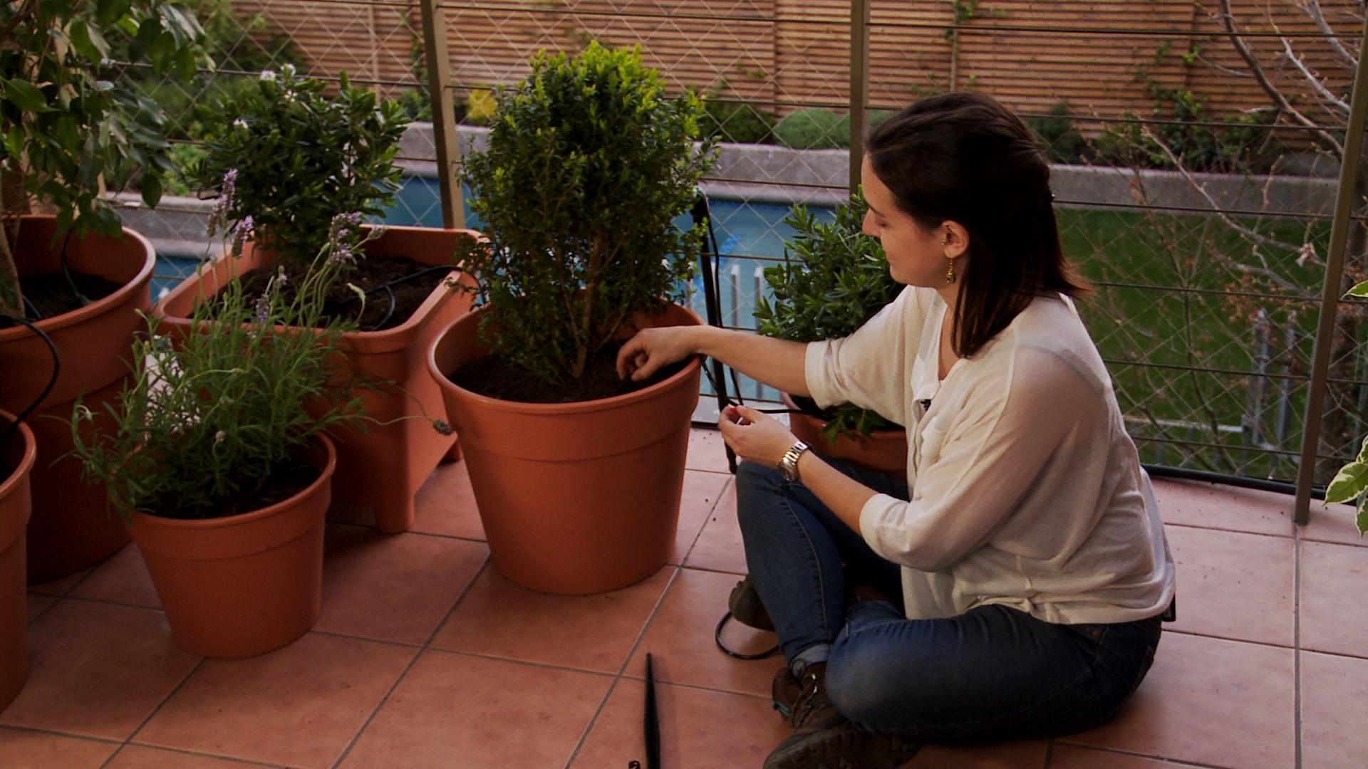 Las plantas en maceteros también pueden tener un riego automático. Esto es muy bueno para ellas y para nuestra comodidad, ya que con la llegada de la primavera y a medida que sube la temperatura, debemos aumentar la frecuencia con la que regamos las plantas, lo que puede llegar a ser incompatible con nuestros ritmos de vida.
