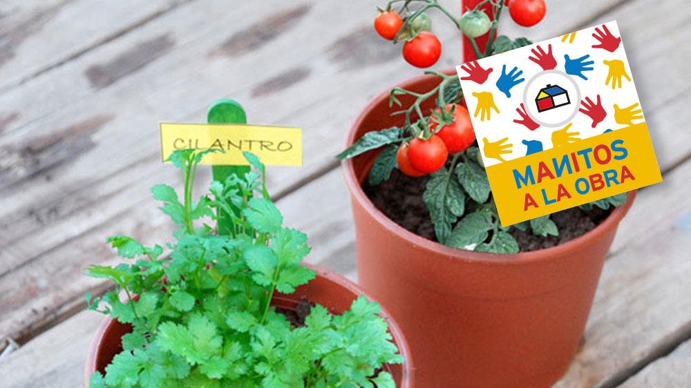 ¡Cultiva tomatitos cherry y cilantro en lindos maceteros! Con este divertido tutorial podrás armar un mini huerto en tu casa y cosechar lo que plantaste.