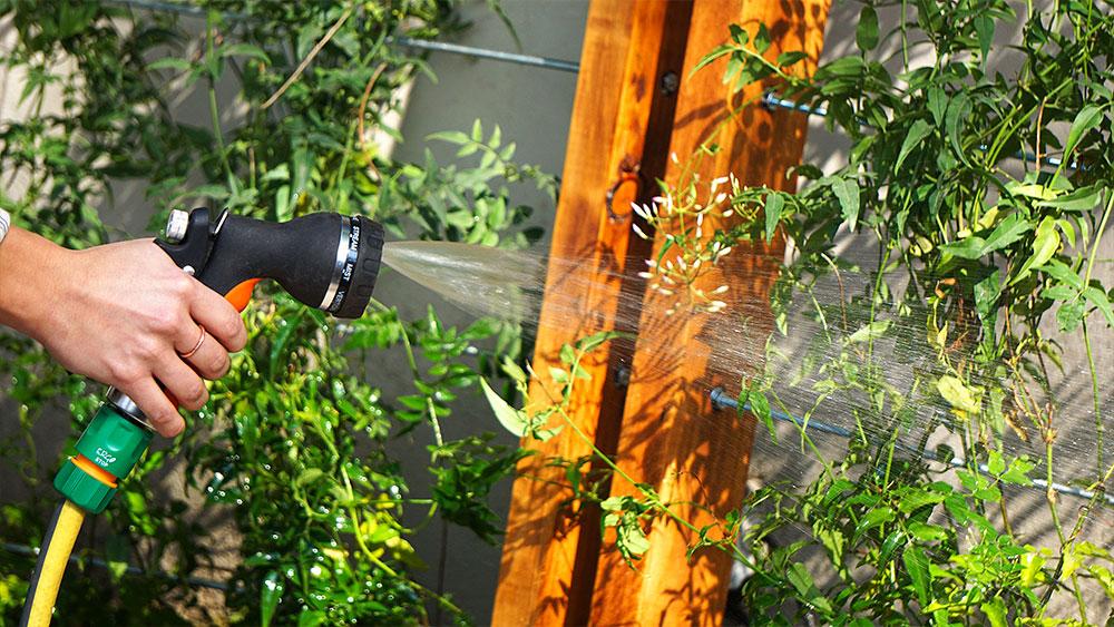 Una buena manera de cubrir los muros del jardín o terraza, es con plantas trepadoras, pero hay que pensar en la utilización de tutores que sirvan como guía para que crezca y se desarrolle. Pueden ser estructuras de madera, alambre o hierro, lo importante es que sean firmes y estables para que sirvan como soporte.