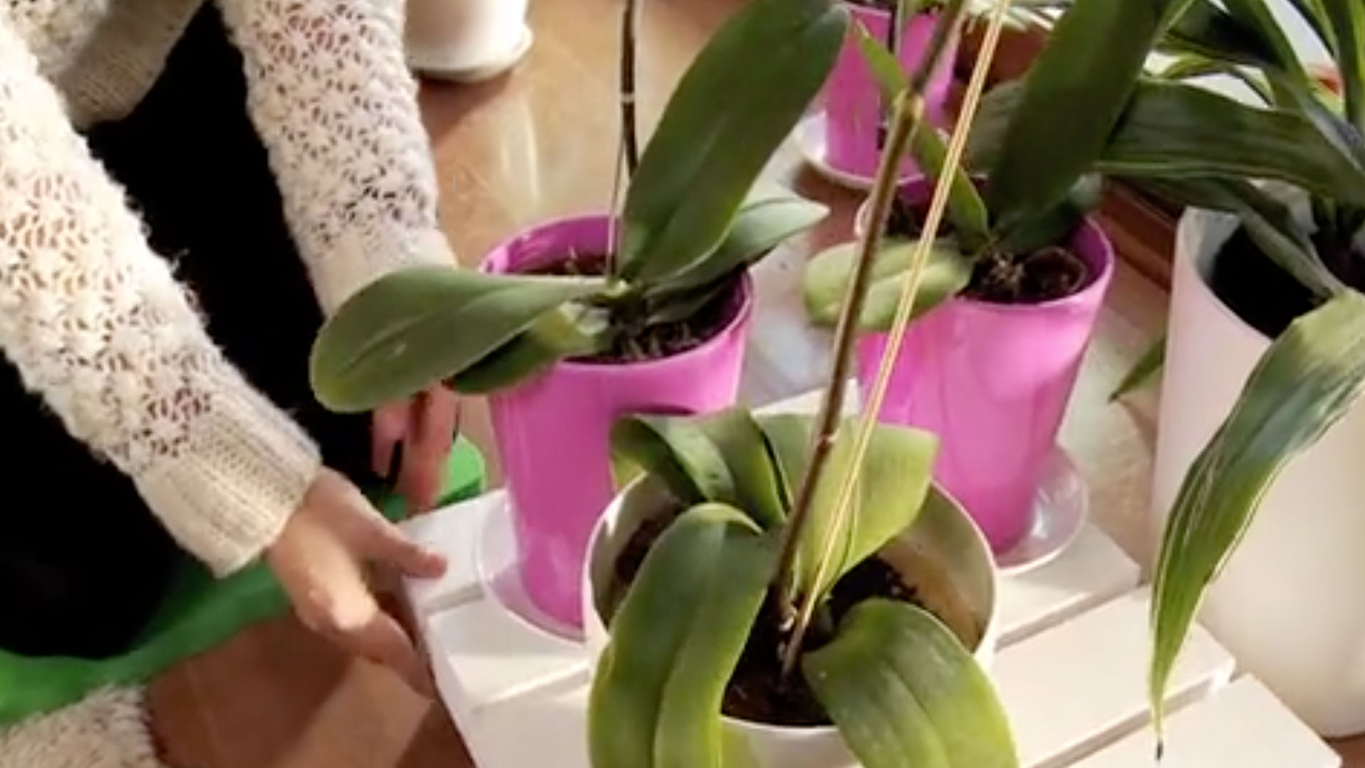Las orquídeas y otras especies delicadas necesitan estar en un macetero fácil de transportar, ya sea para protegerlas del frío, buscar la luz o simplemente para cambiarlas de lugar. Una opción es tener una base con ruedas, fácil de hacer y muy cómoda de usar.