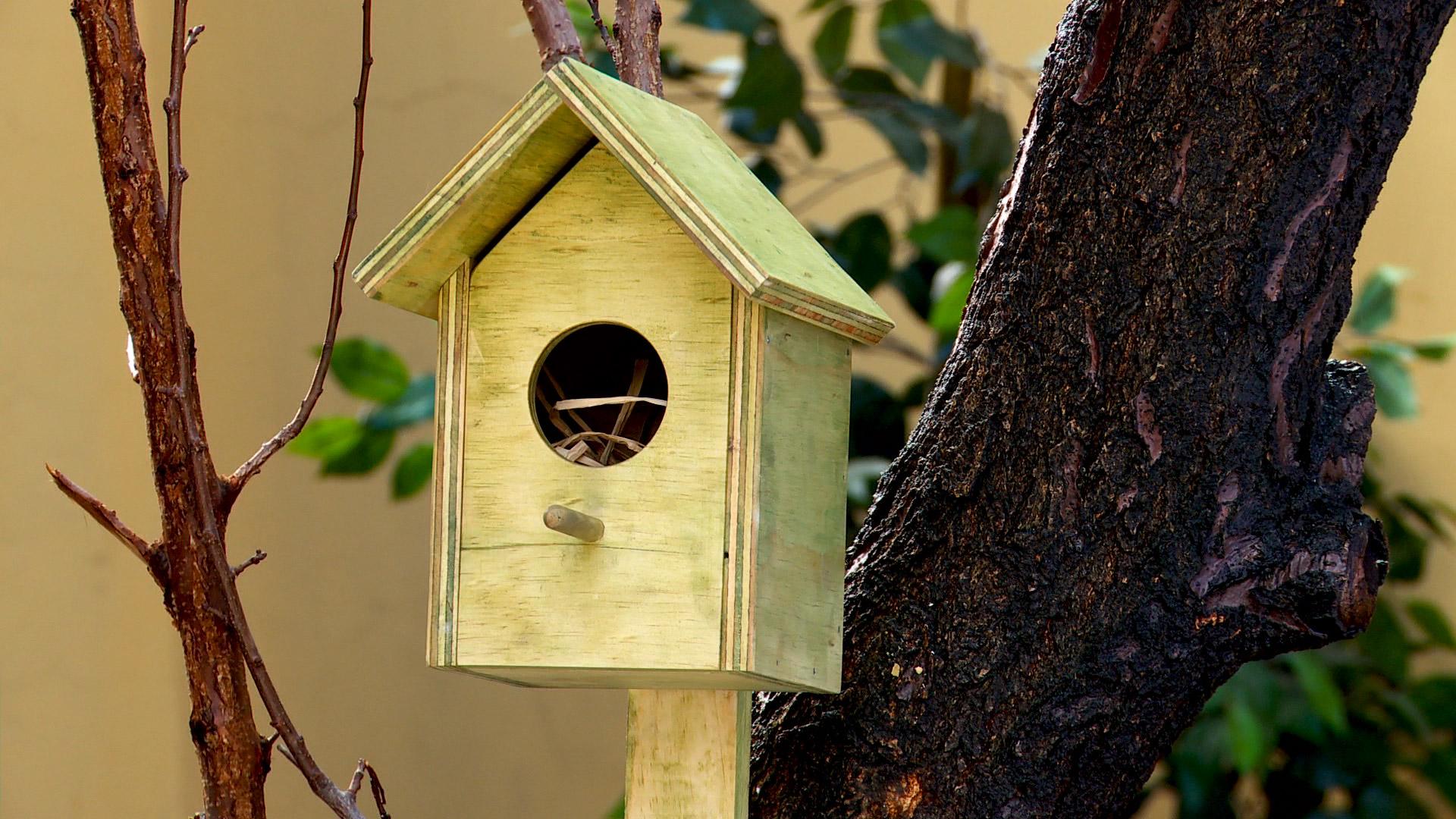 Construir una pajarera para poner alimentos a las aves silvestres, o como refugio para anidar, puede ser una buena actividad para hacer con los niños.