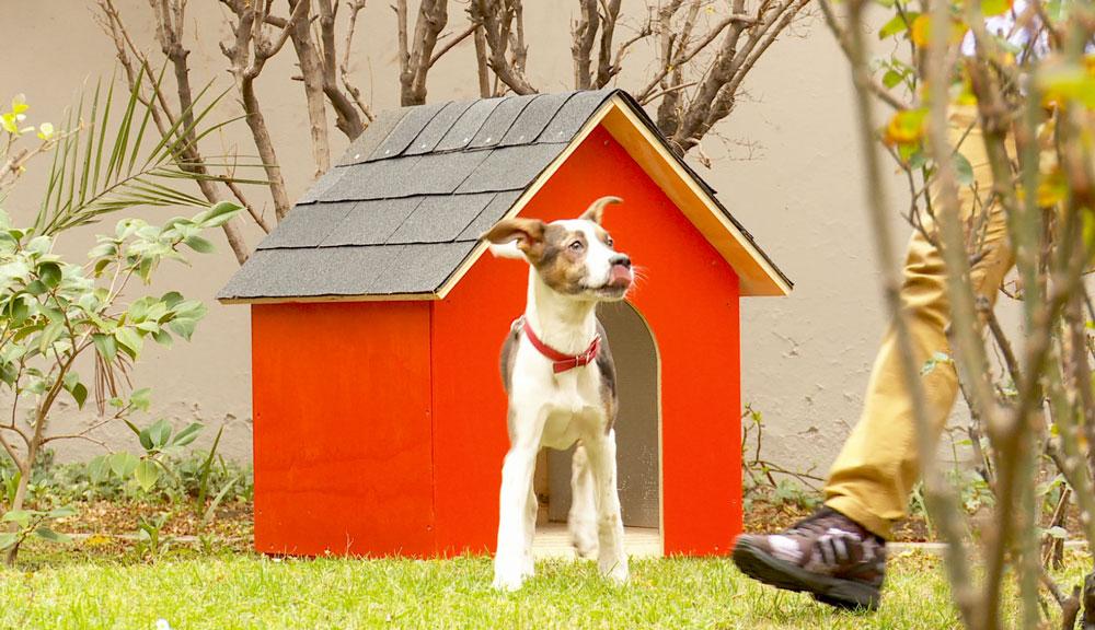 Para que una casa sea un refugio que proteja de las bajas y altas temperaturas, se debe considerar poner un aislante, detalle que también corre para la casa del perro.