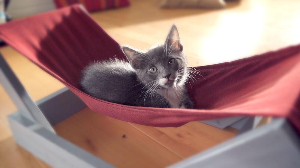 Si eres un amante de los gatos y tienes uno, no puedes dejar de hacer esta hamaca. Como bien sabemos, a los felinos les encanta acurrucarse y dormir rodeados ya sea entre mantas, cojines o en algún rincón escondido y estrecho, por eso este proyecto es ideal para ellos.