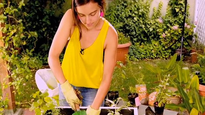 Las hierbas medicinales se pueden cultivar en una huerta o en macetero con bastante materia orgánica y buen drenaje. Por eso en este proyecto mostraremos cómo hacer un huerto en cajones con hierbas sanadoras, como melisa, salvia, menta, manzanilla, entre otras.