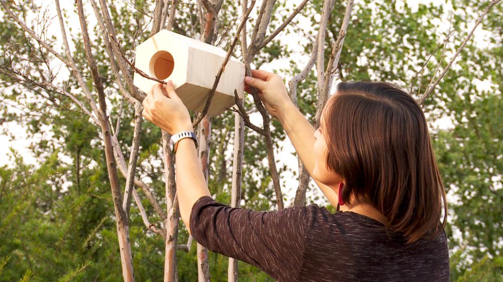Un gran complemento natural en los jardines son los pájaros, pero la ciudad no siempre es propicia para ellos, por eso en este proyecto queremos construir una pajarera que les ofrezca condiciones atractivas para que se queden en el jardín o terraza formando sus nidos.