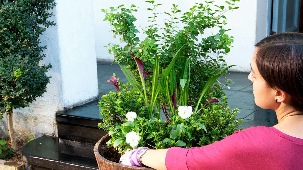 Las macetas son una excelente manera para decorar, no sólo terrazas o un ambiente interior, sino también una entrada de casa. Sobre todo cuando se puede tener macetas de diferentes tamaños, o elegir el material de la maceta por ejemplo madera, greda, cemento o plástico.