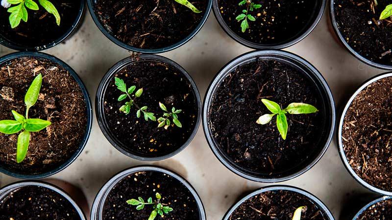En este sencillo proyecto, te enseñaremos a crear tu propia compostera paso a paso. Con ella podrás hacer todo el compost que quieras, ayudando al planeta y de paso, también a tus plantas. ¡Comencemos!