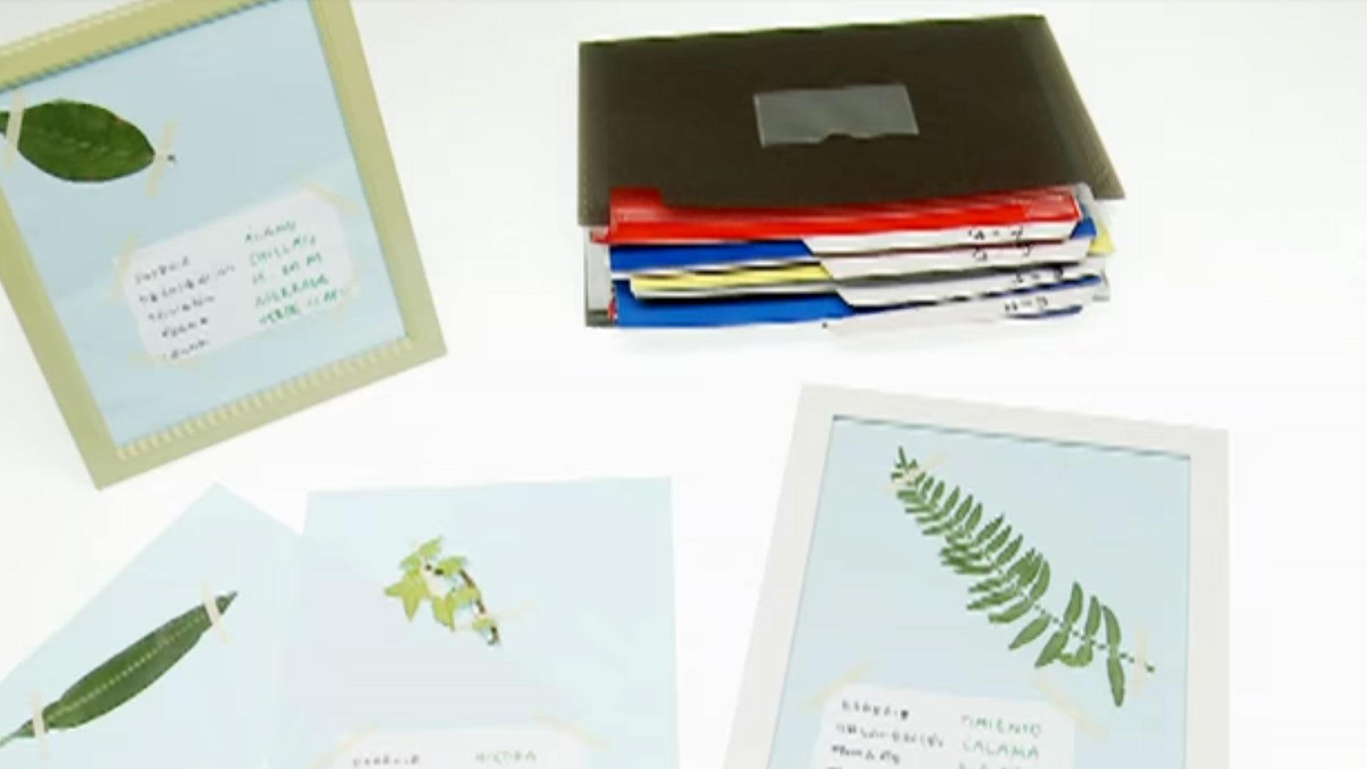 Para aprender de la naturaleza nada mejor que hacer un herbario, una colección de plantas o partes de ella, con hojas que podemos recolectar de árboles u otras especies que nos gusten. Un herbario es una colección de plantas o partes de plantas, secadas, conservadas, e identificadas.