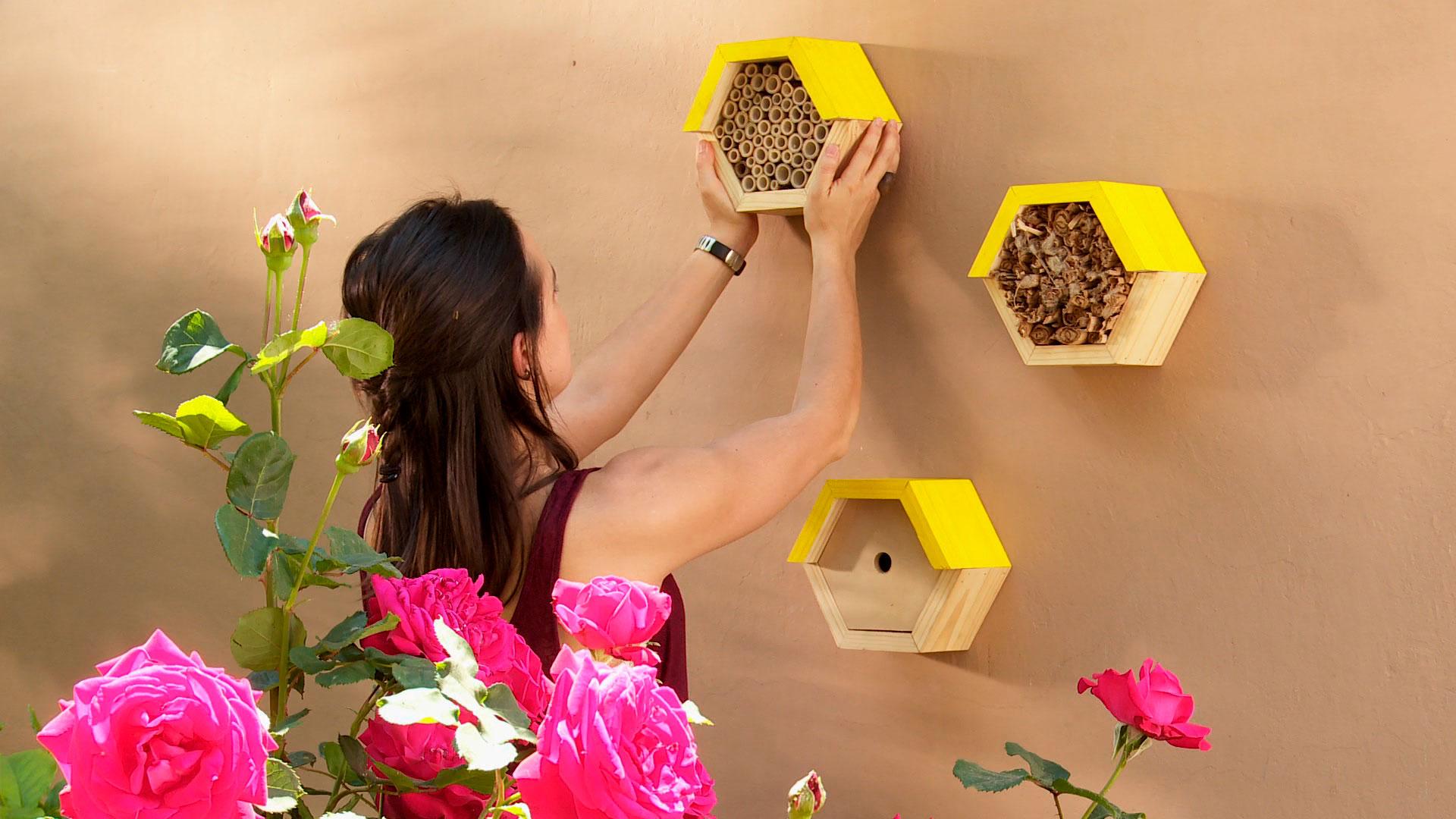 El descenso de la población de las abejas es mundial, y aunque aún no hay una explicación concluyente, la más aceptada apunta al uso excesivo de pesticidas. Dentro de todas las especies, en el mundo unas 20 mil y en Chile 437 registradas, las más comunes son las solitarias; para ellas haremos un refugio que las invitará a permanecer en el jardín.