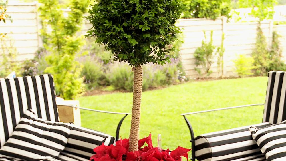 La topiaria o poda ornamental es una práctica en jardinería que se utiliza para darle forma a las plantas, es un arte que se remonta a los romanos, y que tuvo su esplendor en los jardines del Palacio de Versailles, con plantas en forma de pirámides o conos.