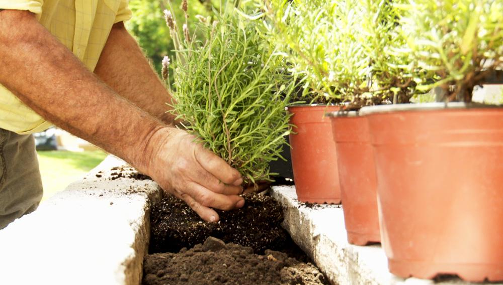 Las jardineras en obra son súper útiles y se ven muy bonitas en los balcones, pero es común que por mala mantención filtren humedad a los muros o la losa, así que antes que el problema sea mayor hay que volver a impermeabilizarlas.