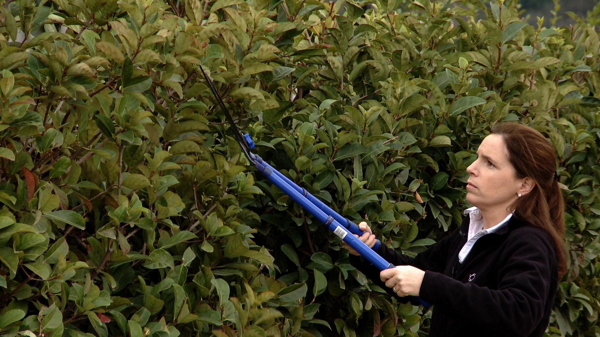 En primavera podemos hacer algunas labores para sacar el máximo provecho a nuestro jardín, una de ellas es preocuparnos del pasto, para tenerlo más verde, pero con menos gasto de agua y fertilizante. Además de hacer una mantención para evitar que los setos se pongan leñosos y pierdan su follaje verde.