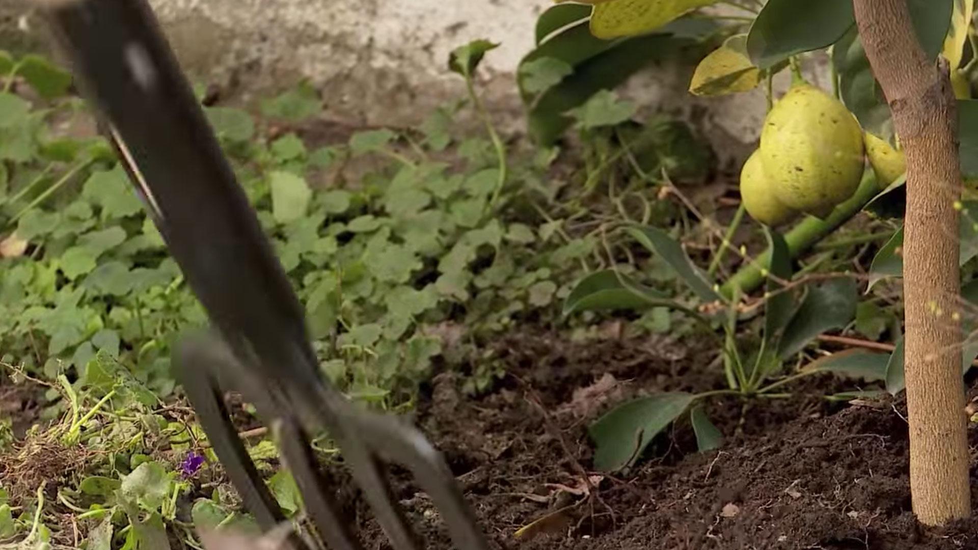 Si tras una lluvia o después de regar abundantemente el jardín, se aprecian charcos que permanecen por más tiempo del deseado, es síntoma de problemas de drenaje en el suelo. Un mal drenaje es más que un simple problema: es causa de muerte de las plantas. Préstele atención y aprenda a solucionar este desagradable problema que afecta a su jardín o al patio de su hogar.