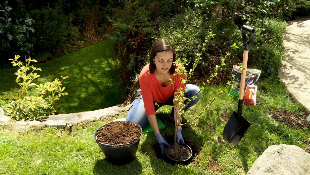 Con la llegada de la primavera, las plantas comienzan a llenar nuestro jardín de colores y es cuando vemos qué nos falta y qué nos gustaría tener. Un árbol frutal siempre es un plus; con el tiempo nos dará sombra y a su vez exquisitos frutos, por ello enseñaremos cómo plantarlos. Además resolveremos el problema del trasplante de cactus y haremos un comedero para aves.