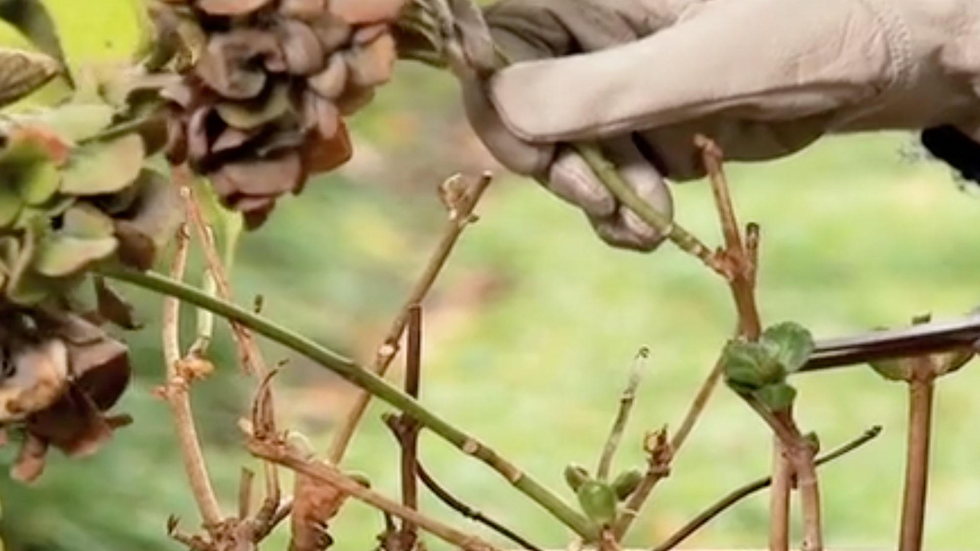 En invierno es el momento de podar, ya que la mayoría de los árboles y arbustos están en reposo vegetativo, y como algunos están sin hojas, podemos ver exactamente qué ramas cortar sin afectar su desarrollo.