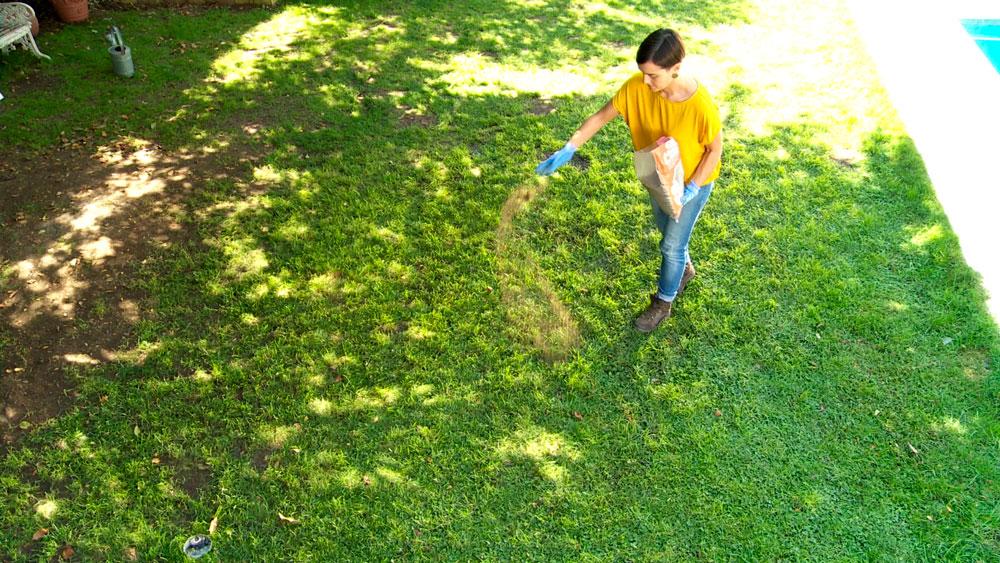 En otoño el pasto puede sufrir por el ataque de hongos, pero se puede hacer un tratamiento preventivo. El ataque de hongos se identifica cuando hay pasto muerto, de color amarillento, café y en manchas circulares.