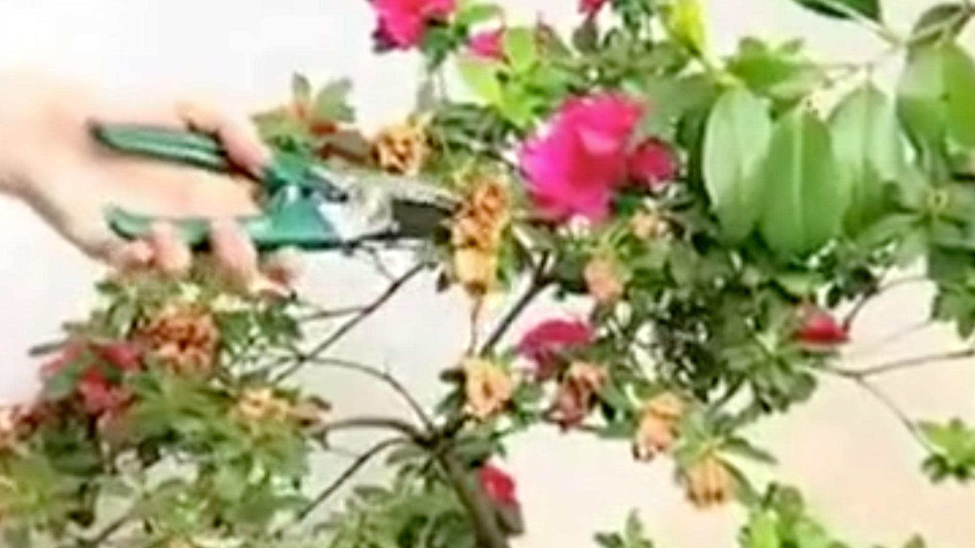 En octubre, con la llegada de la primavera, es normal que el jardínse llene de flores, pero hay ciertos descuidos que pueden retrasaresto o impedir el correcto desarrollo de las plantas.