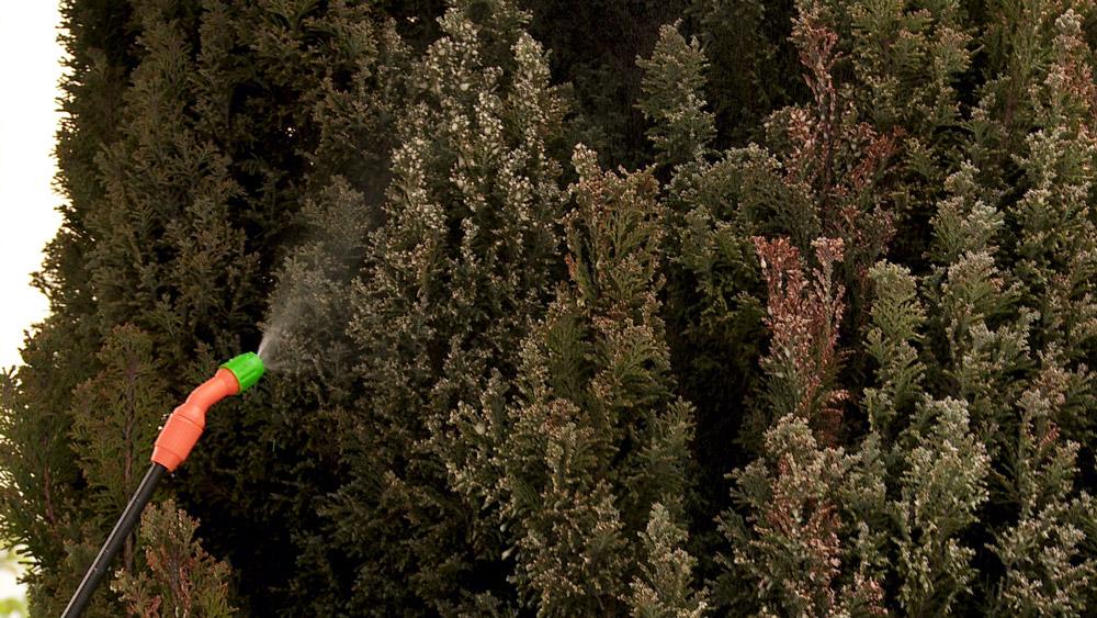 En los meses de invierno no se detiene el trabajo en el jardín, si bien hay muchas especies que están en reposo, tenemos que estar preocupados de prevenir plagas y hongos, además de evitar problemas por el exceso de agua o compactación de la tierra.