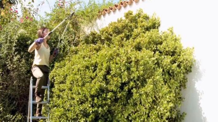 En verano las plantas están en pleno crecimiento, muchas veces se han desarrollado tanto en primavera que pueden estar desordenadas, por lo que una poda en esta época ayudará a fortalecerlas. Es muy importante que esta poda sea suave, muy distinta a la que se hace en invierno.
