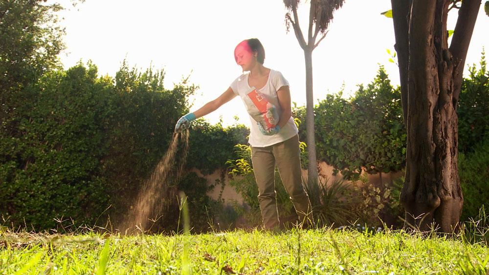 El verano y sus altas temperaturas pueden traer secuelas en el jardín, ya que todas las especies tienen diferentes resistencia al calor excesivo, por eso cuando no les entregamos los cuidados adecuados, y por ejemplo el suelo está compactado y el riego no es eficiente, las plantas pueden sufrir daños graves.