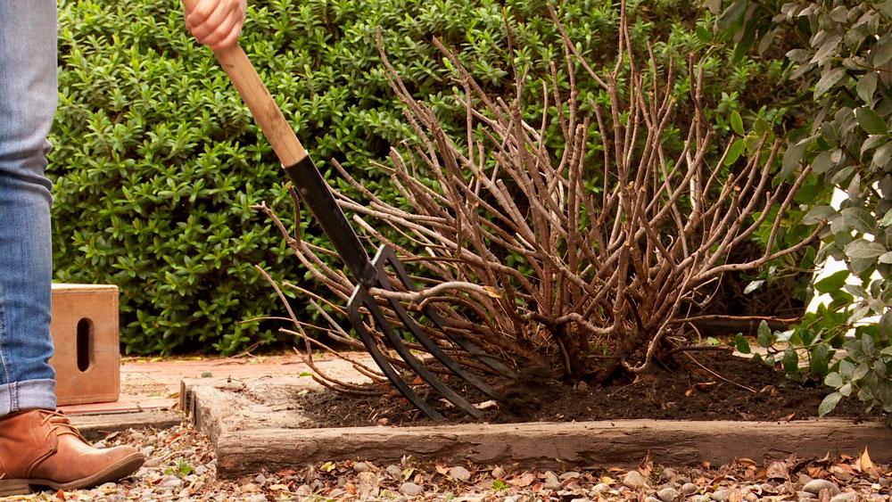 Es común que los arbustos leñosos, a medida que crecen, reciban menos luz en su interior, lo que genera en ellos un aspecto seco y emboscados. Esto provoca que pierdan su forma, se seque el centro o interior de los arbustos, y además deja espacios oscuros lo que puede ser condición para que aparezcan hongos.