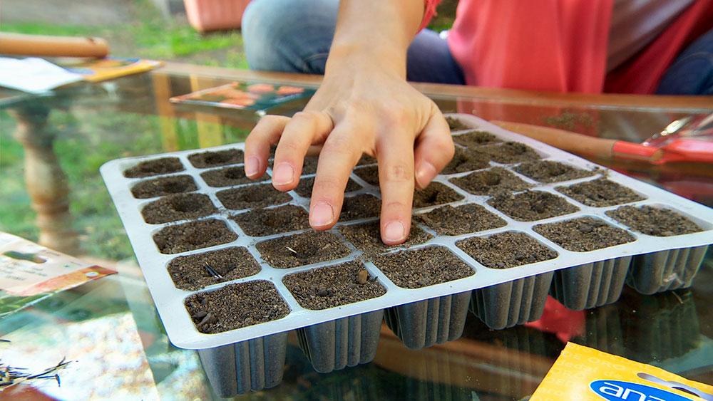 Existen dos maneras de reproducir plantas: con semillas desarrolladas a través de la polinización y de forma vegetativa (bulbos o esquejes). La época de otoño es ideal para utilizar ambos sistemas en nuestro jardín y reproducir las especies que queremos conservar y propagar.