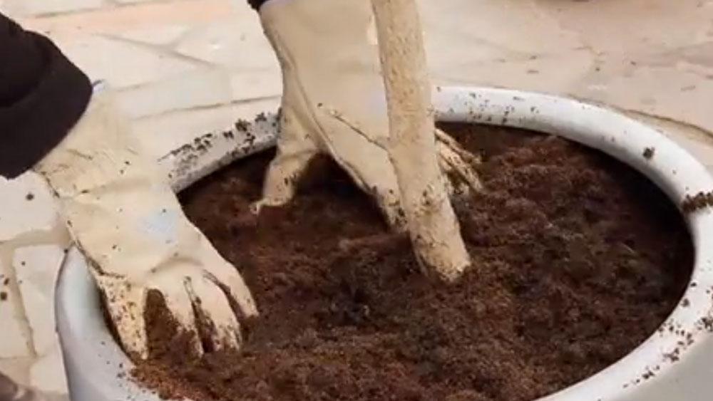 Las plantas en maceteros necesitan más cuidados y control, ya que como su espacio es reducido, los nutrientes se consumen más rápido, la tierra se compacta fácilmente, y por esto es más probable tener problemas de drenaje o falta de crecimiento.